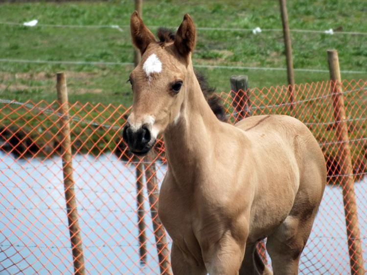 Equine-May-557.jpg?1403918092670