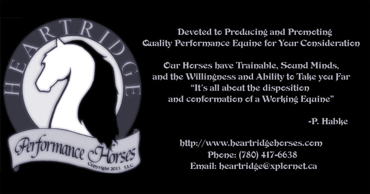 Quality Sport Performance Equine With Class, Color & Conformation. All Equine are Safe, Sound & Sane. We Are Devoted to Producing and Promoting Quality Performance Equine For Your Consideration