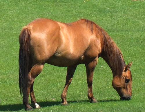 Horses-June12-2012-273.jpg
