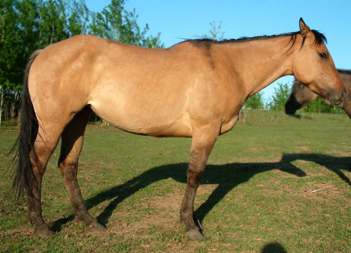 Horses-May28-2012-312.jpg