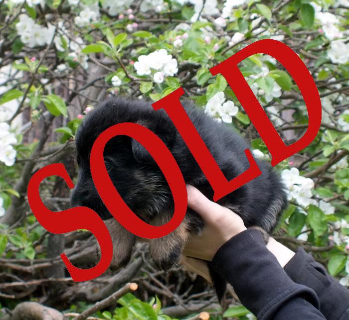 male-1---sold.jpg