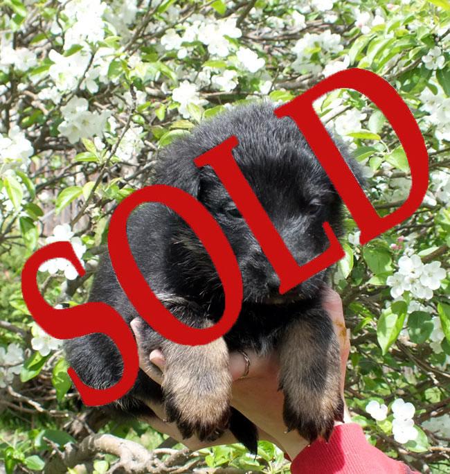 male-3---sold.jpg